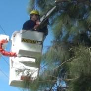 Árboles y poda: precaución y seguridad